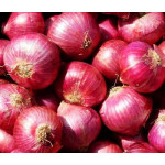 Fresh Onion from Myanmar