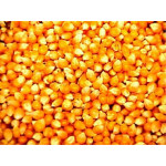 Fresh Yellow corn export from Myanmar