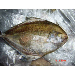 Fresh Black Pomfret Fish