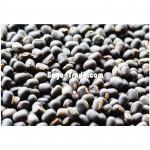 Black Matpe Bean from Myanmar