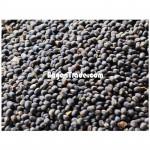 Raw Material of Matpe (Bean)