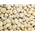 Lablab Bean in Hinthada
