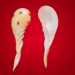 Hand Carved Snail Shell Spoon