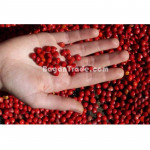 The Red Bead Seeds (Adenanthera Pavonina seeds)