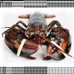 Lobster in Myanmar