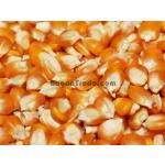 Maize grain (Corn) in Myanmar