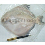Myanmar Chinese Pomfret Fish