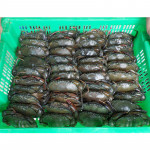 Frozen Soft Shell Crab with best quality