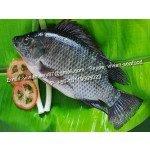Offer China Frozen Black Tilapia Fish (Oreochromis Niloticus) for sale