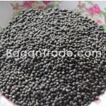SQ Black Matpe (Urag Gram) from Myanmar