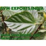 Hibiscus Rosa Sinensis Leaves Exporters