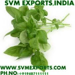 Tulsi Leaves Exporters India