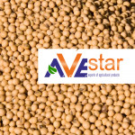 Soybean on favorable terms