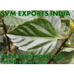 Hibiscus Rosa Sinensis Leaves Exporters
